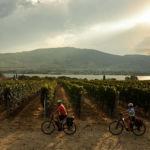 Biking near an orchard